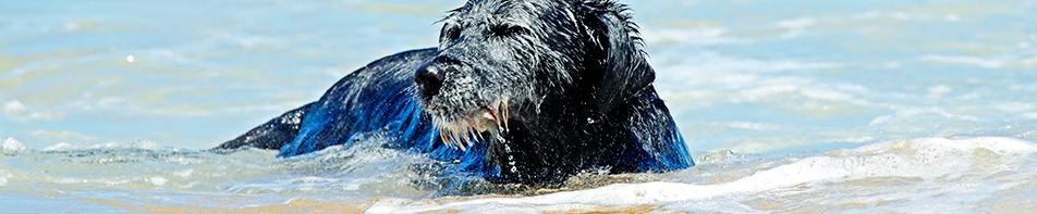 Dierenkliniek in Brabant hond zwemmen