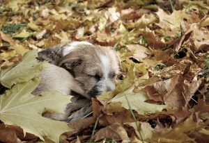 hond in herfstblaadjes