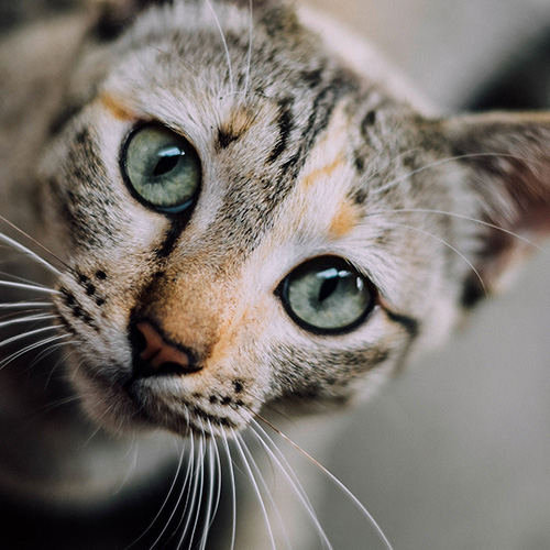 Kat naar de dierenarts brengen